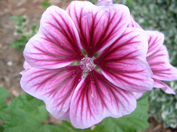 Kukkien Symboliikka