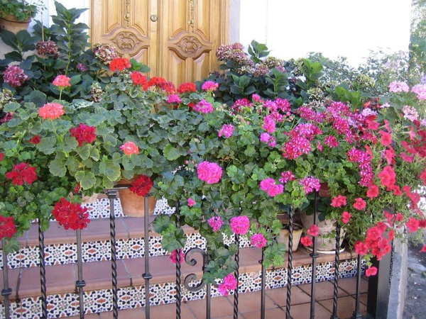 practical balcony ideas colorful colorful red pink flowers